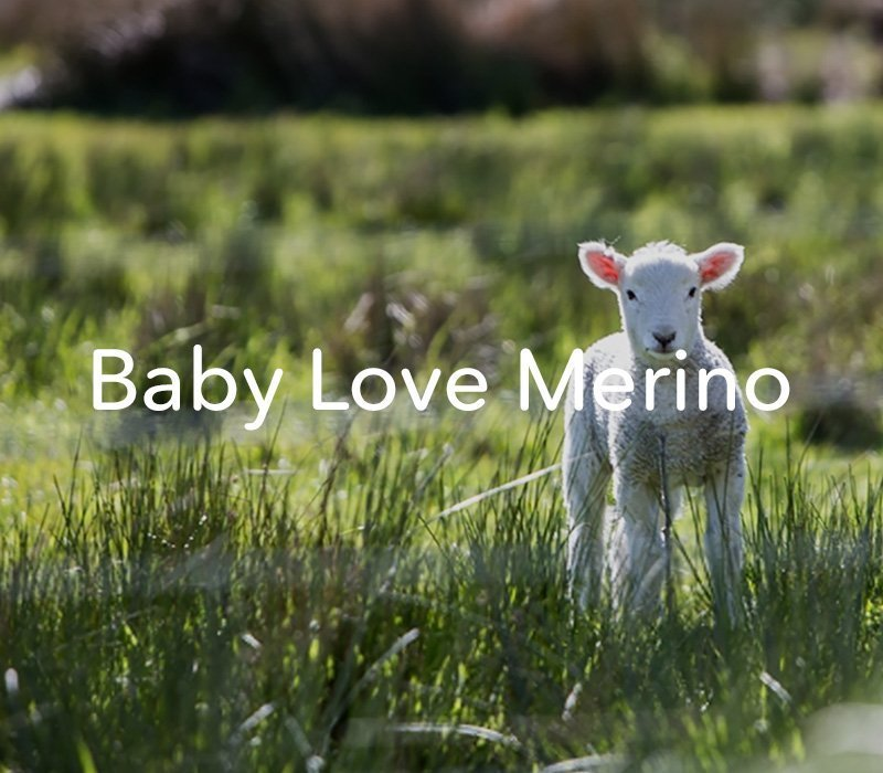 Baby Love Merino – Web Development