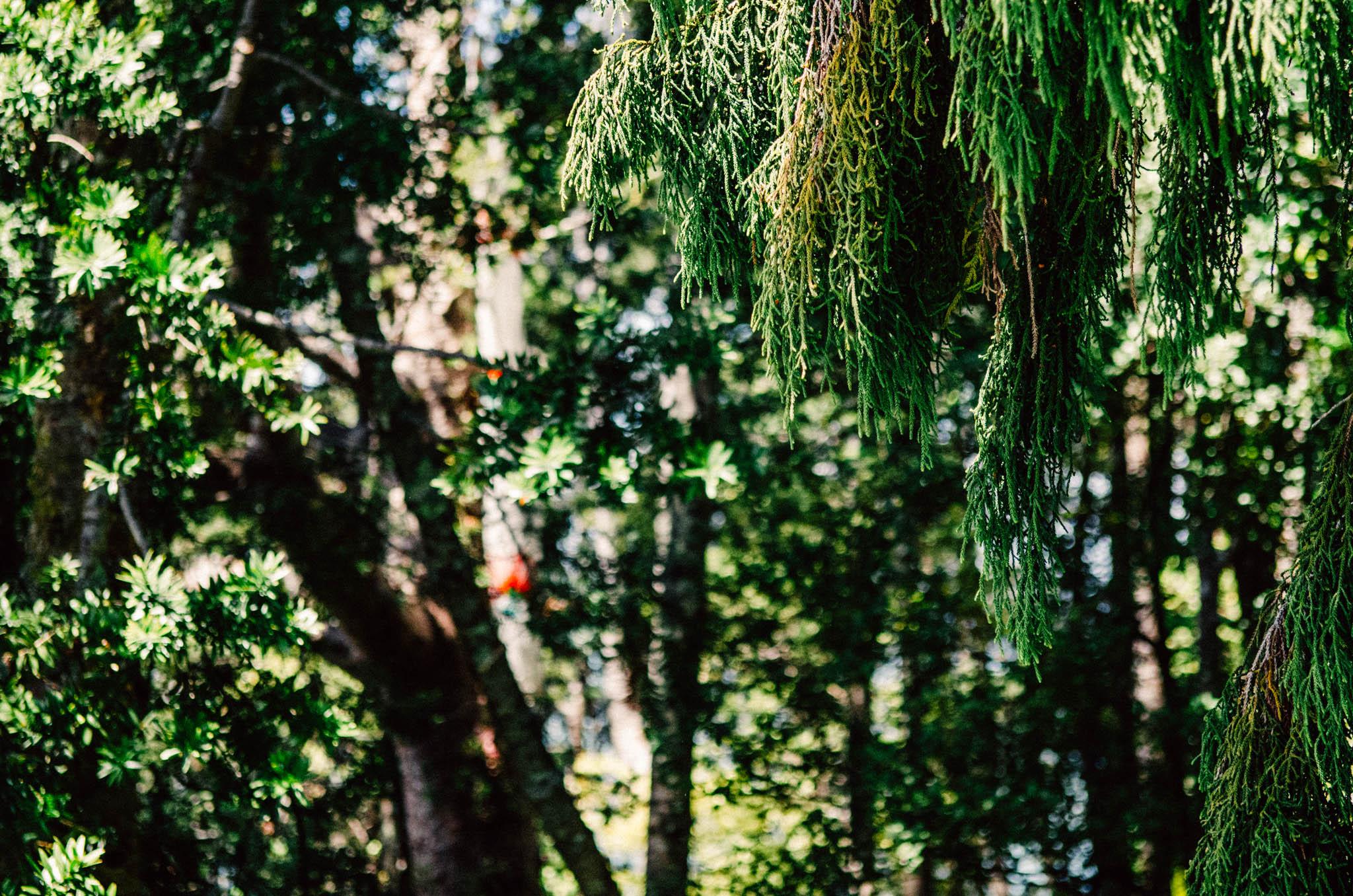 Save Our Kauri Trust