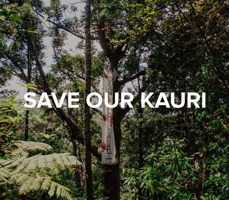 Save Our Kauri Trust – Video and Photography